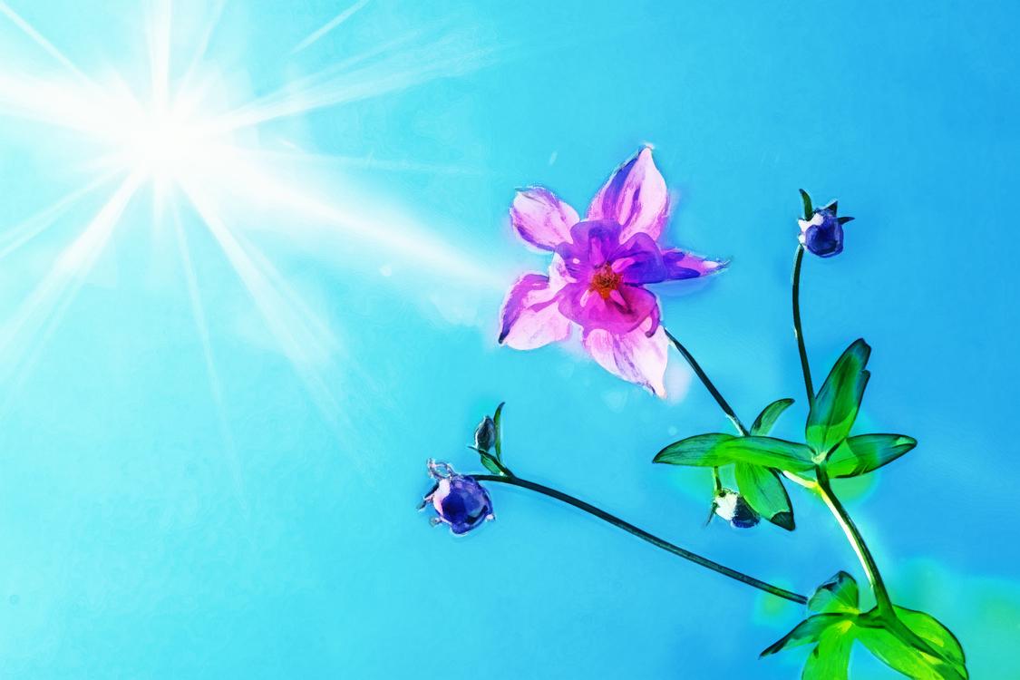 Flower,Nature,Petal