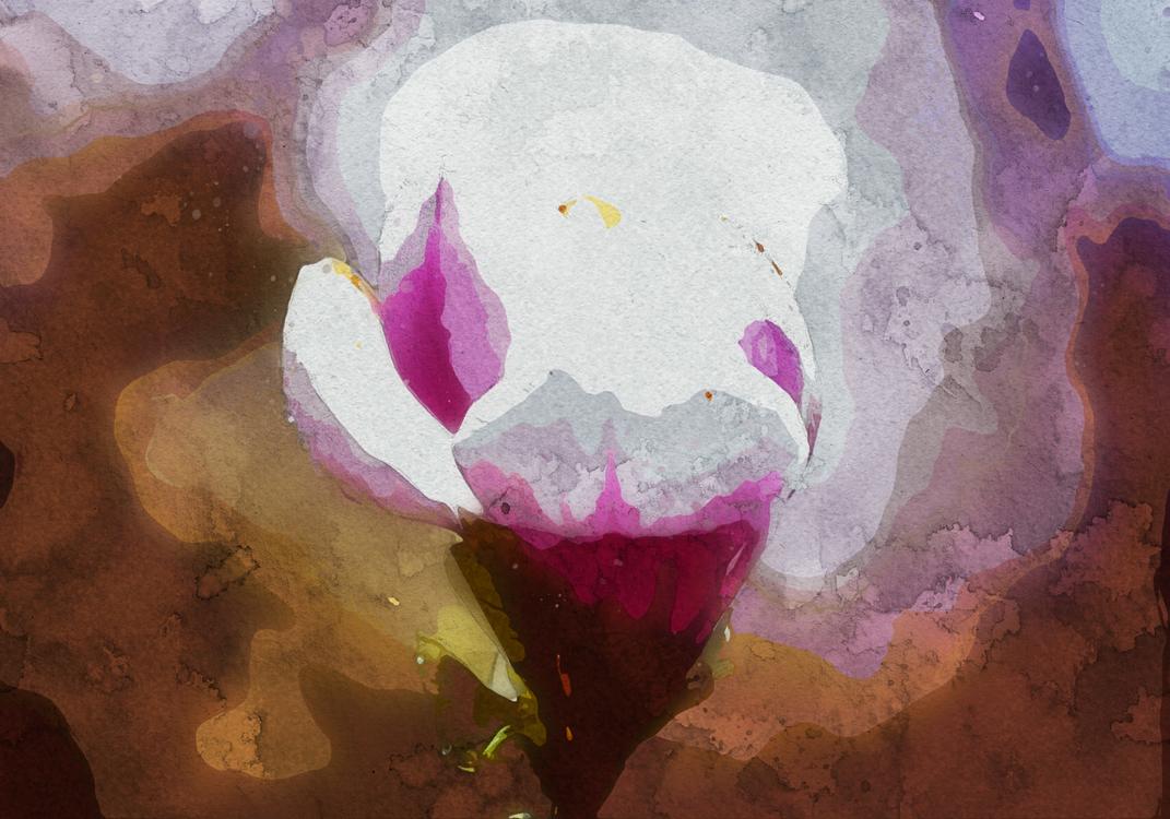 Petal,Pink,Watercolor Paint