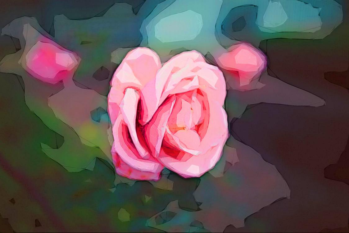 Garden Roses,Pink,Rose