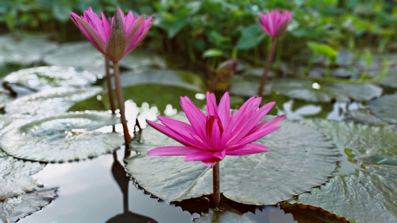Flower,Flowering Plant,Petal
