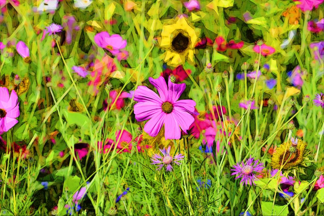 Flower,Flowering Plant,Plant
