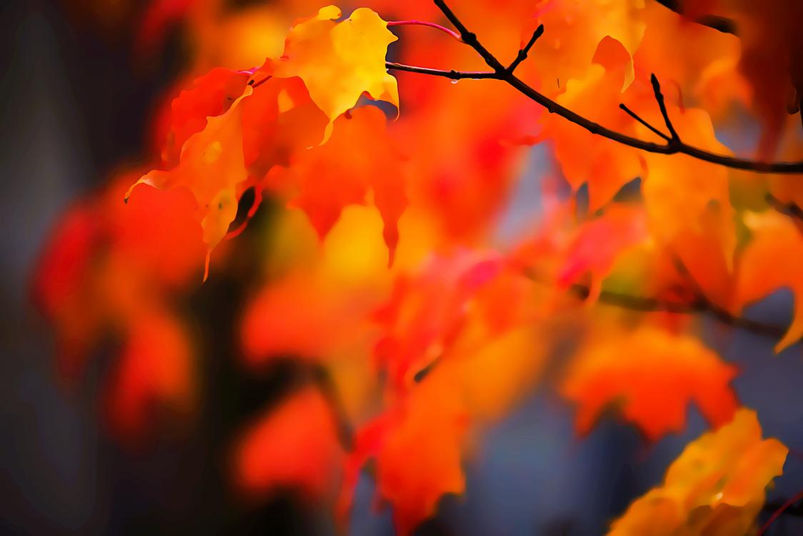Leaf,Nature,Red