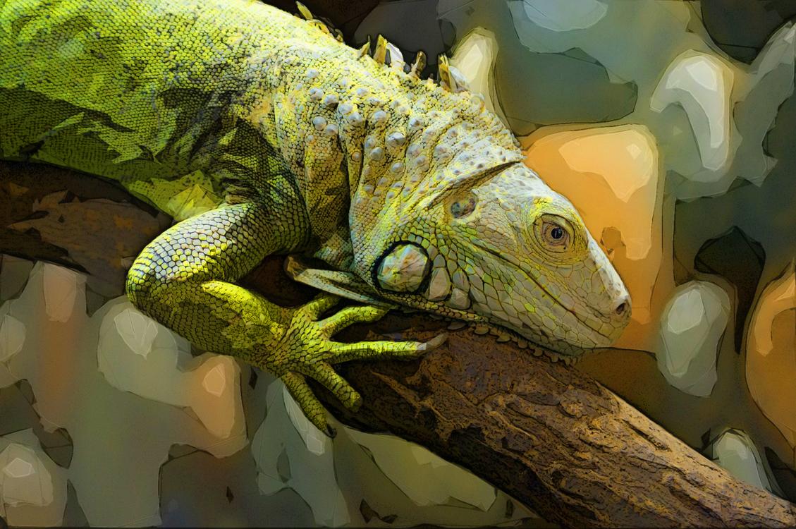 Reptile,Iguana,Iguania