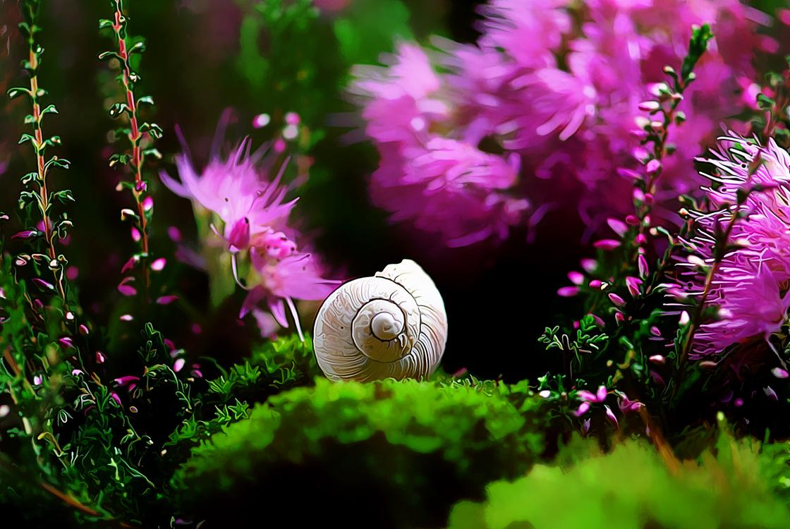 Nature,Flower,Plant