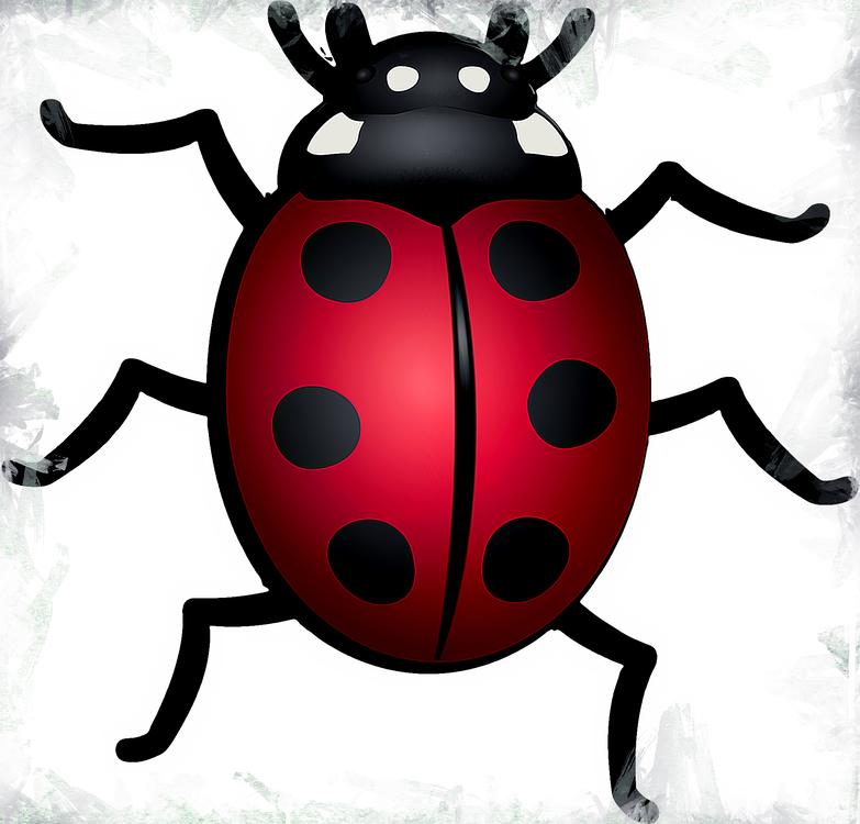 Insect,Beetle,Ladybug