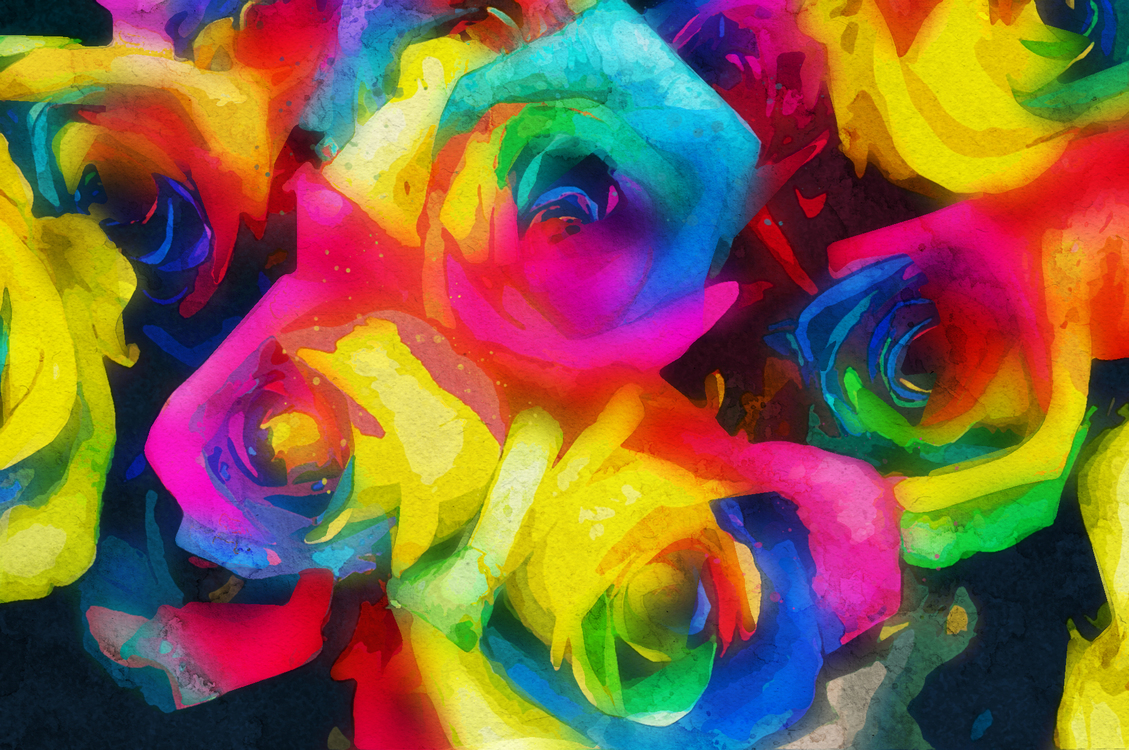 Rose,Rainbow Rose,Rose Family