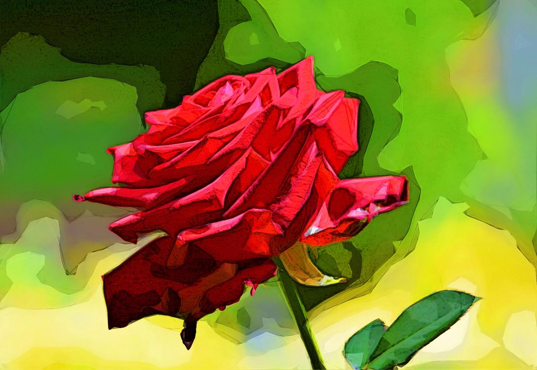 Garden Roses,Red,Petal