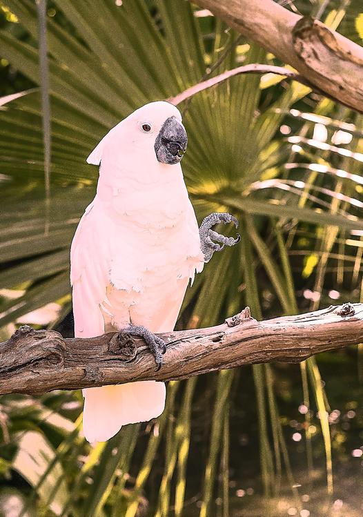 Bird,Parrot,Cockatoo