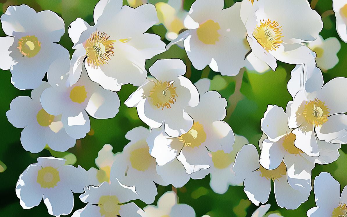 Flower,Flowering Plant,White