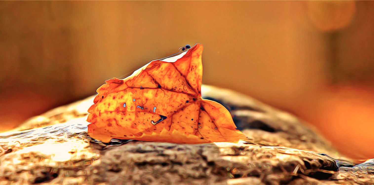 Orange,Leaf,Oil Painting