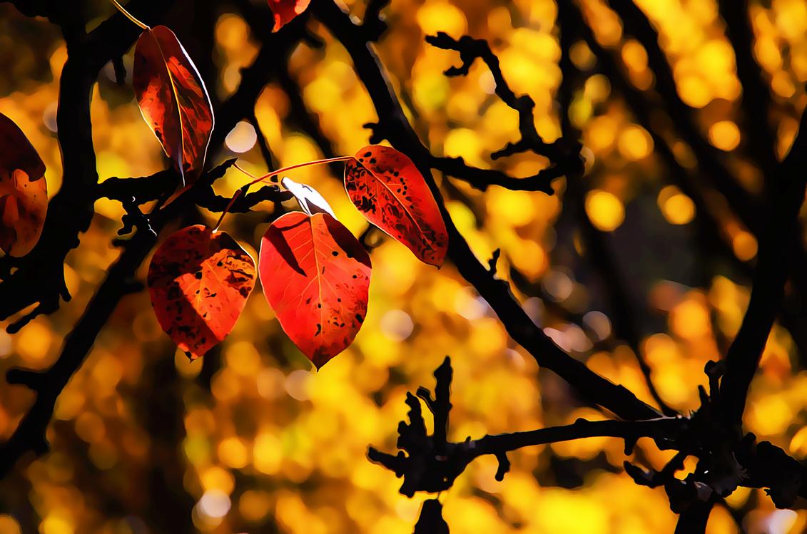 Leaf,Branch,Tree