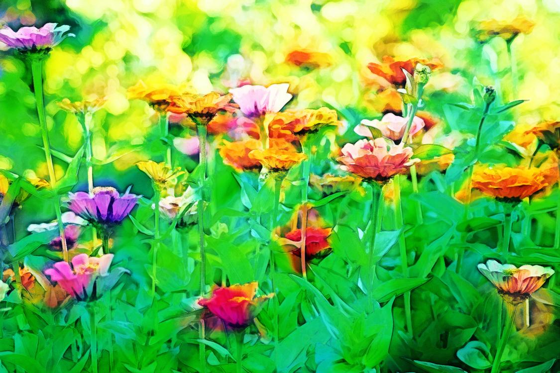 Flowering Plant,Flower,Nature