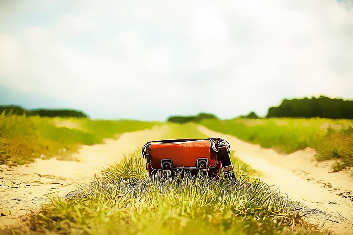 Nature,Natural Landscape,Grass