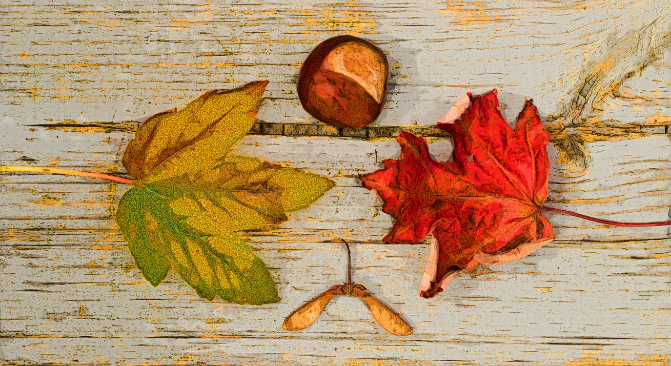 Leaf,Tree,Red
