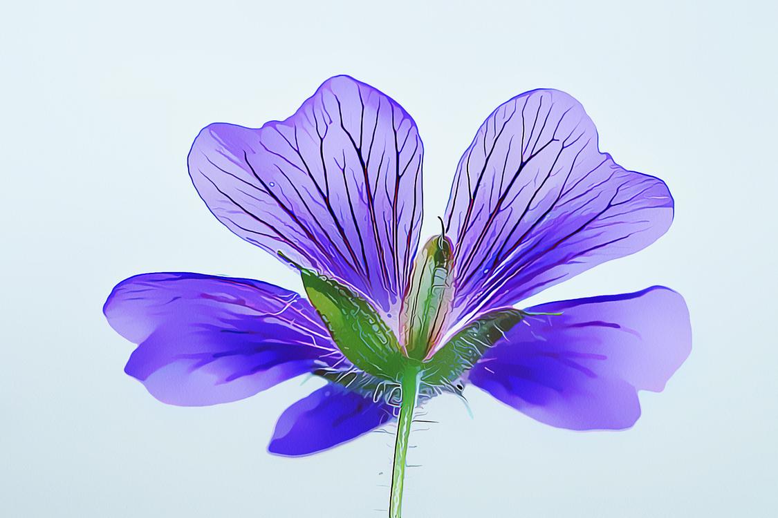 Purple,Petal,Violet