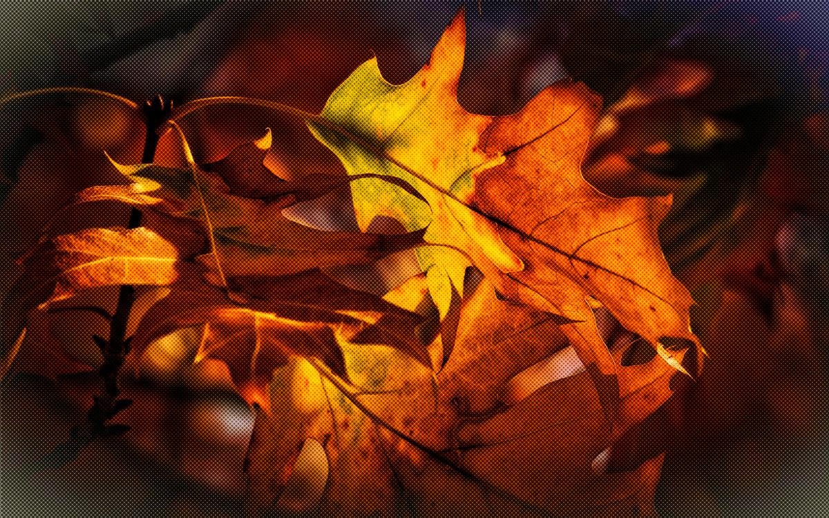 Leaf,Tree,Orange