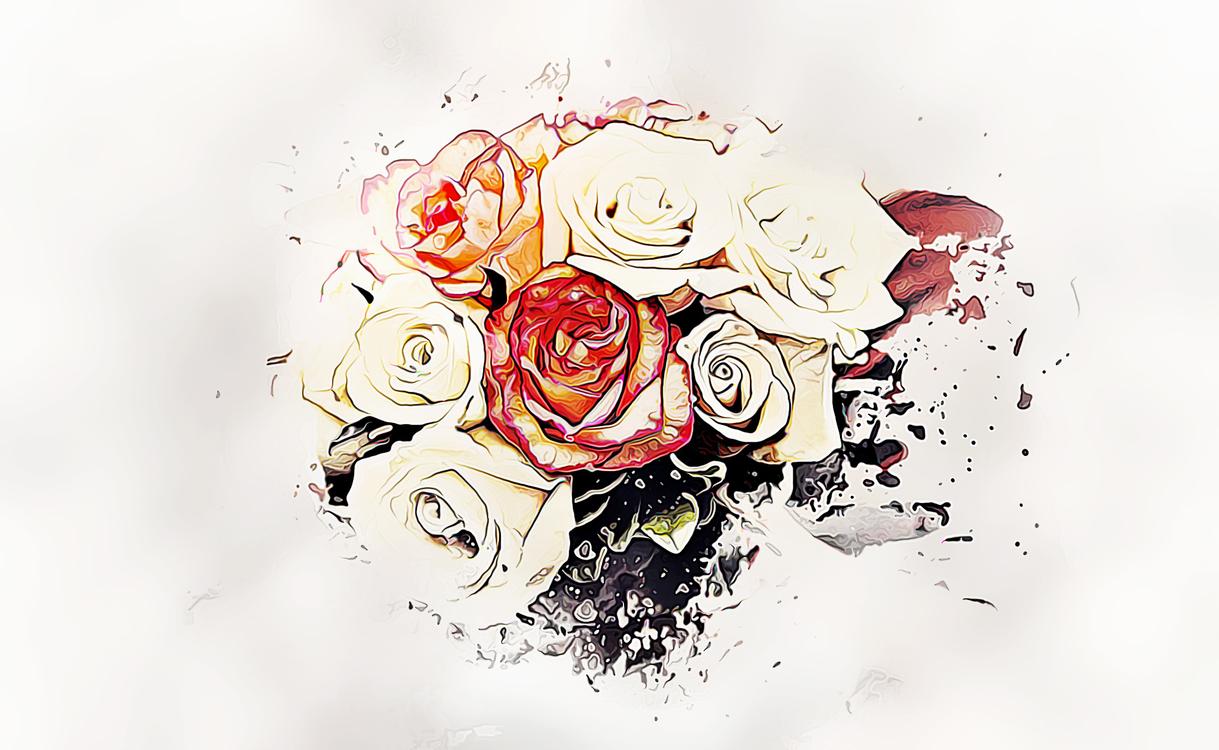 Rose,Flower,Rose Family