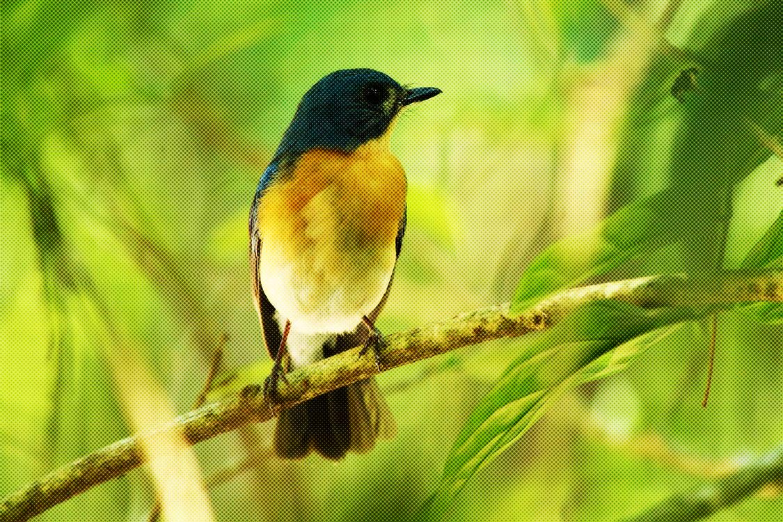 Bird,Beak,Songbird