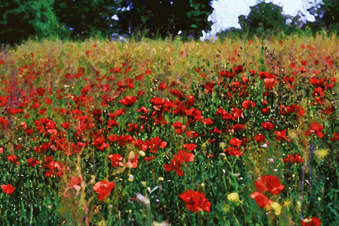 Flower,Flowering Plant,Meadow