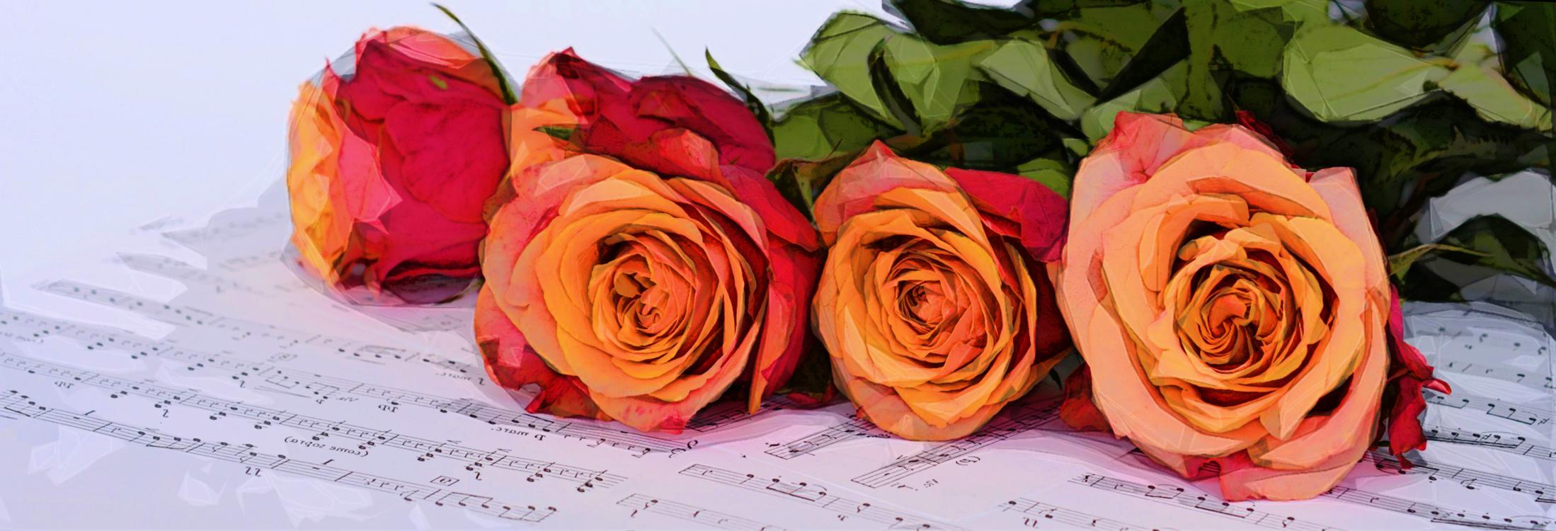 Flower,Garden Roses,Rose