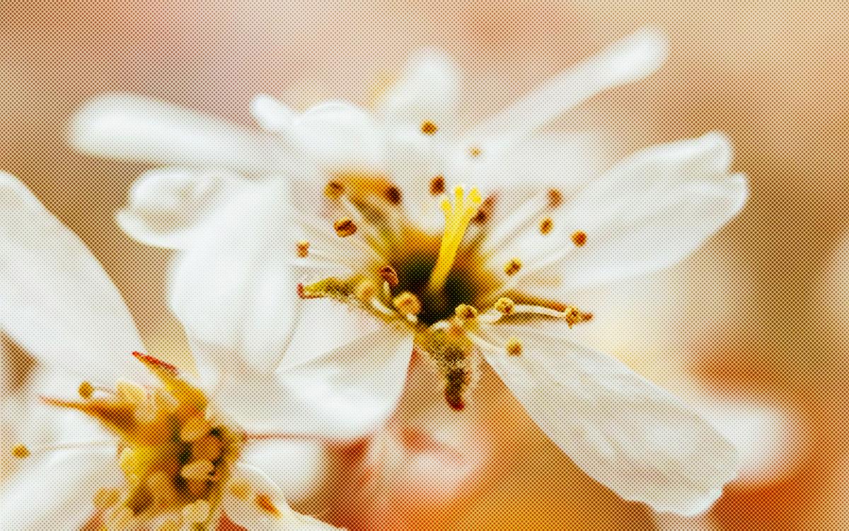 White,Flower,Petal