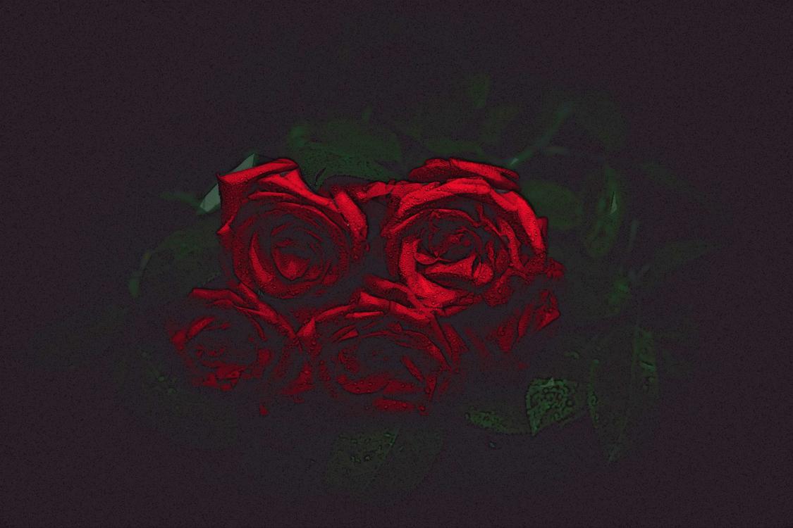 Red,Black,Rose