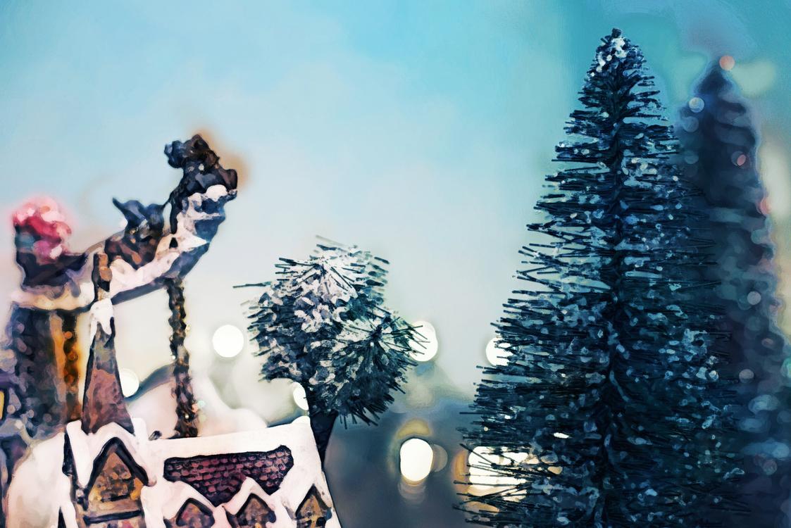 Tree,Sky,Christmas Tree