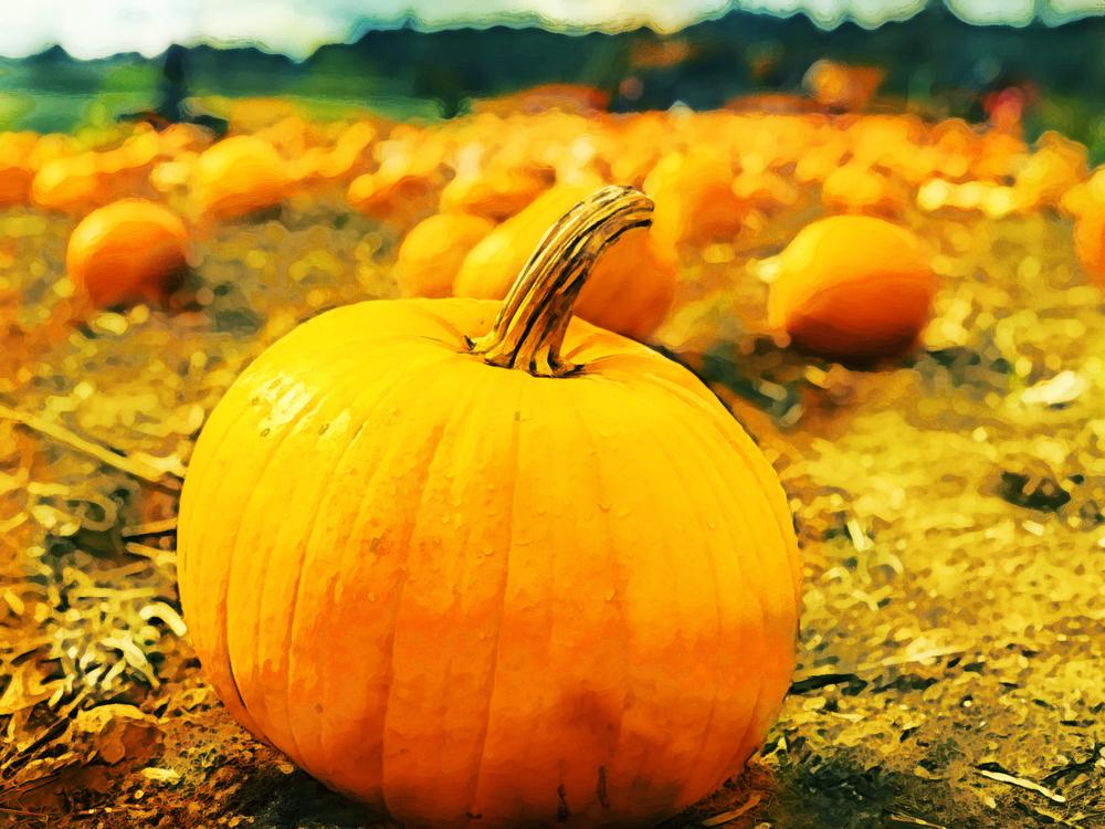 Pumpkin,Winter Squash,Calabaza