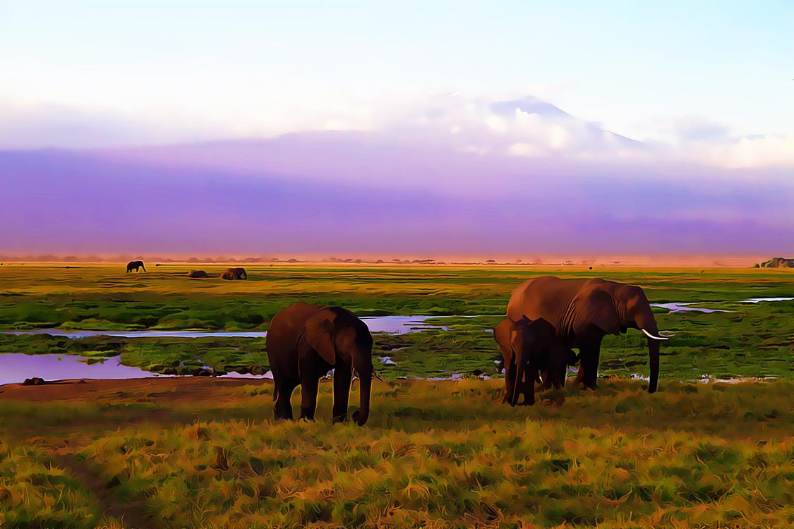Grassland,Pasture,Grazing