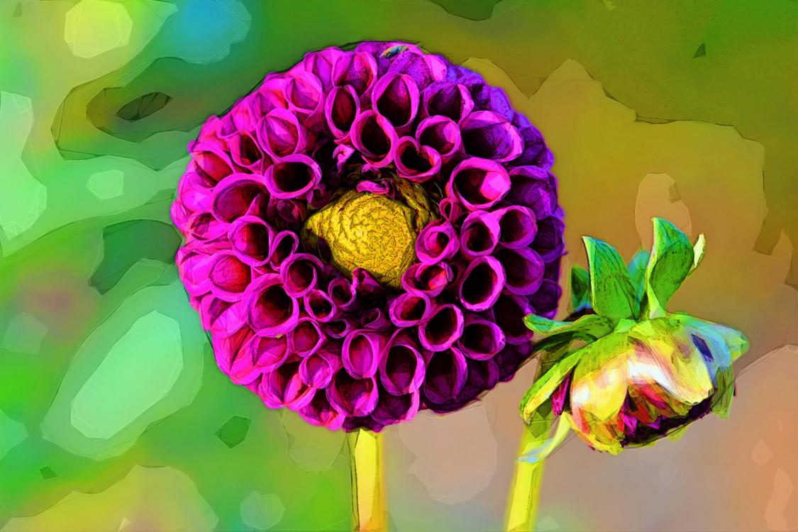 Flower,Petal,Purple