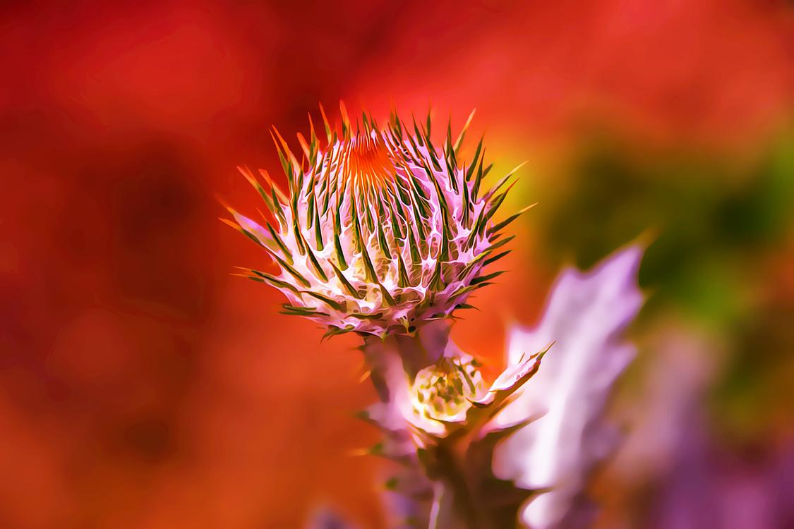 Flower,Plant,Closeup