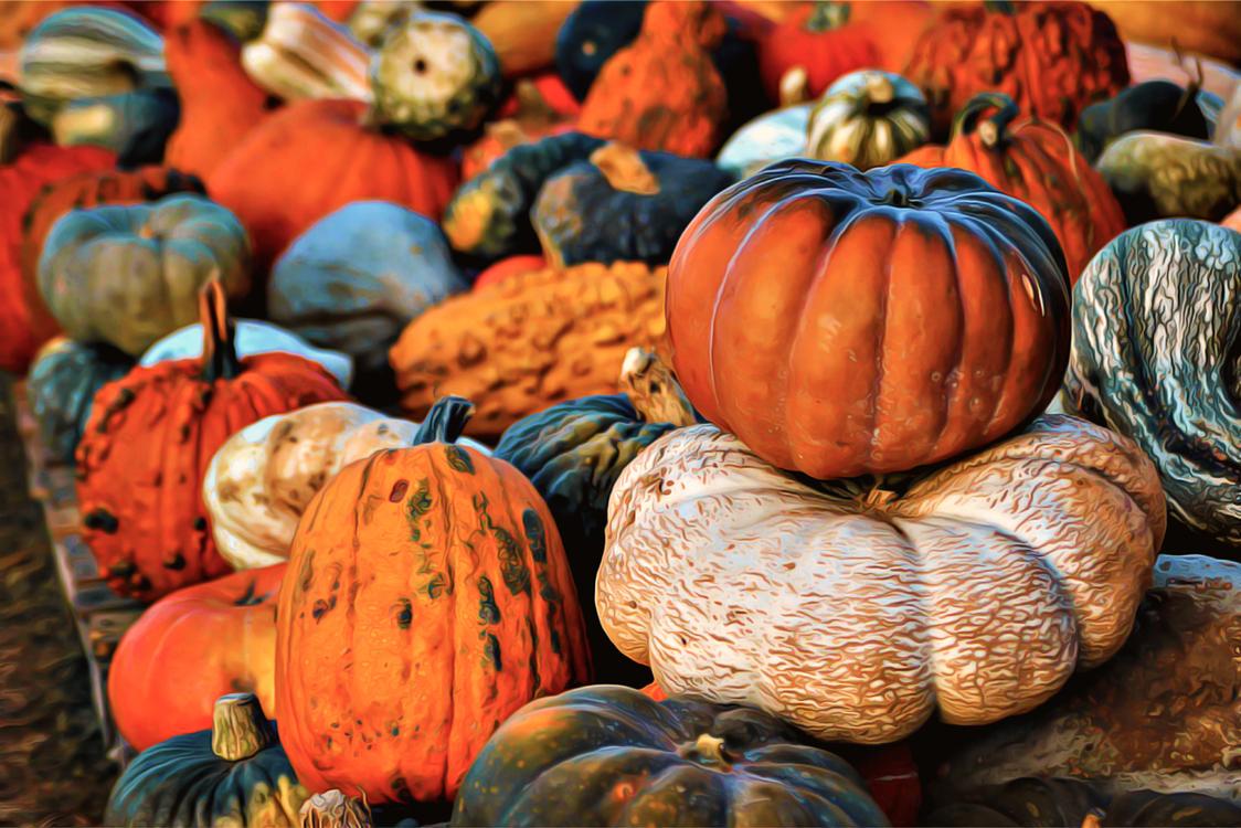 Cucurbita,Pumpkin,Winter Squash