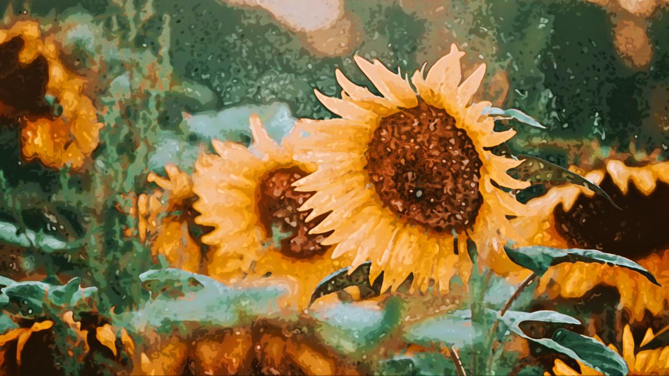 Sunflower,Flower,Painting