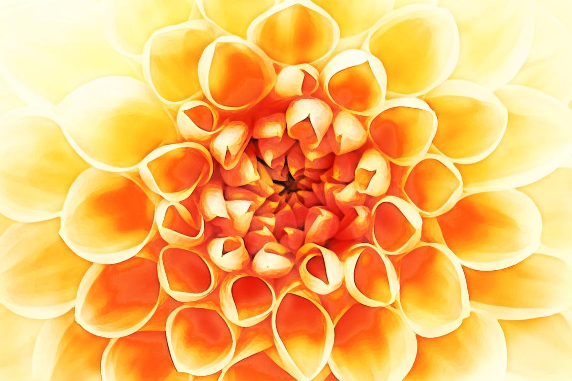 Flower,Yellow,Orange