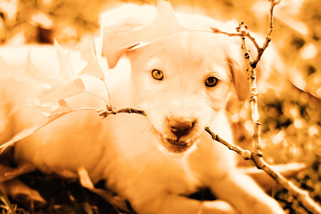 Dog,Dog Breed,Puppy