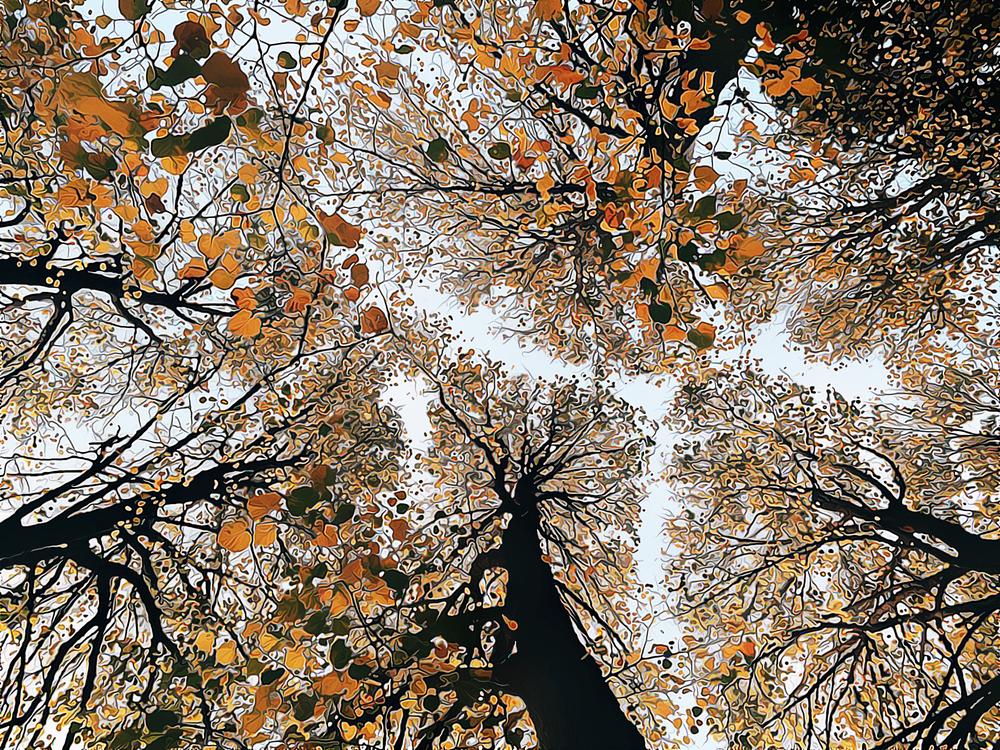 Tree,Branch,Leaf