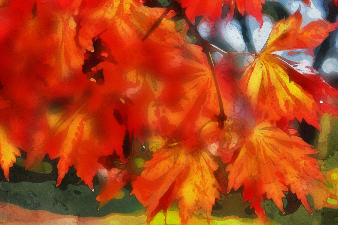 Leaf,Red,Orange