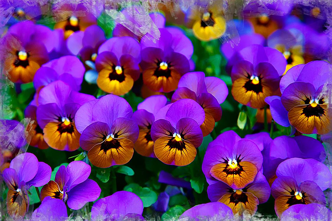 Flower,Flowering Plant,Purple