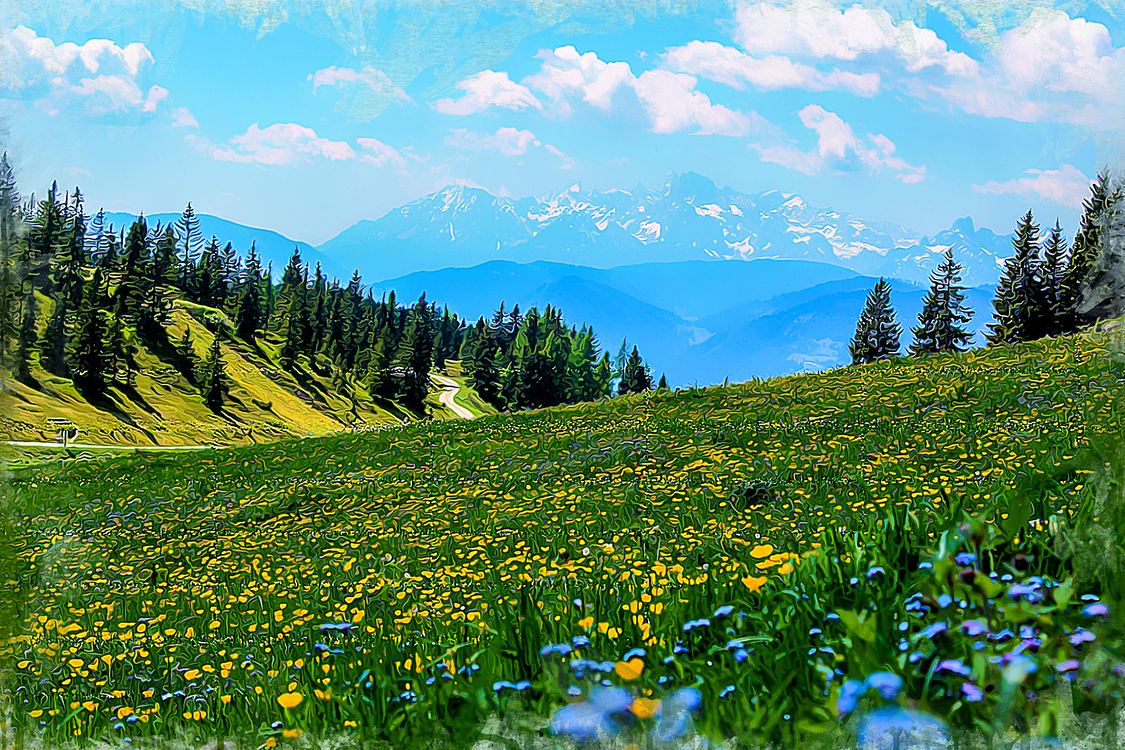 Meadow,Natural Landscape,People In Nature