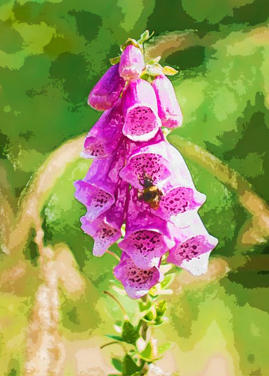 Digitalis,Flower,Plant