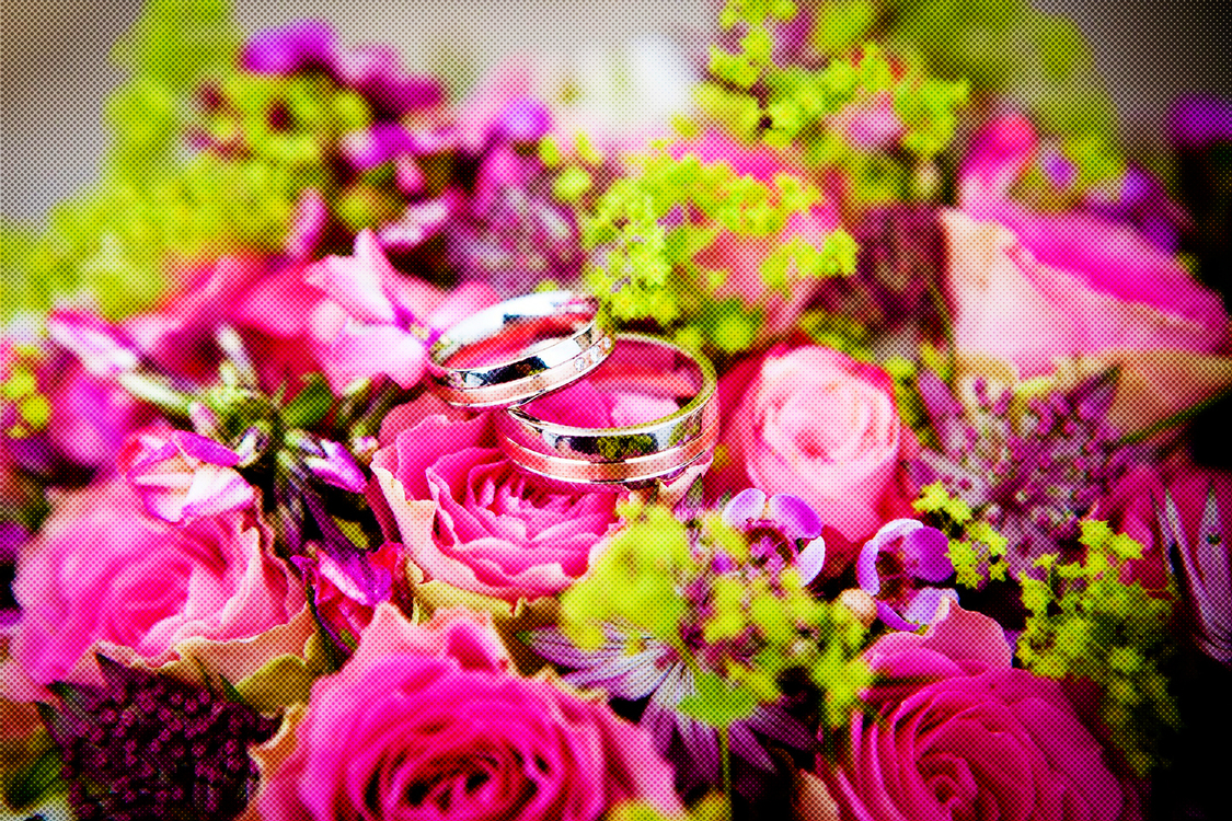 Flower,Pink,Flower Arranging