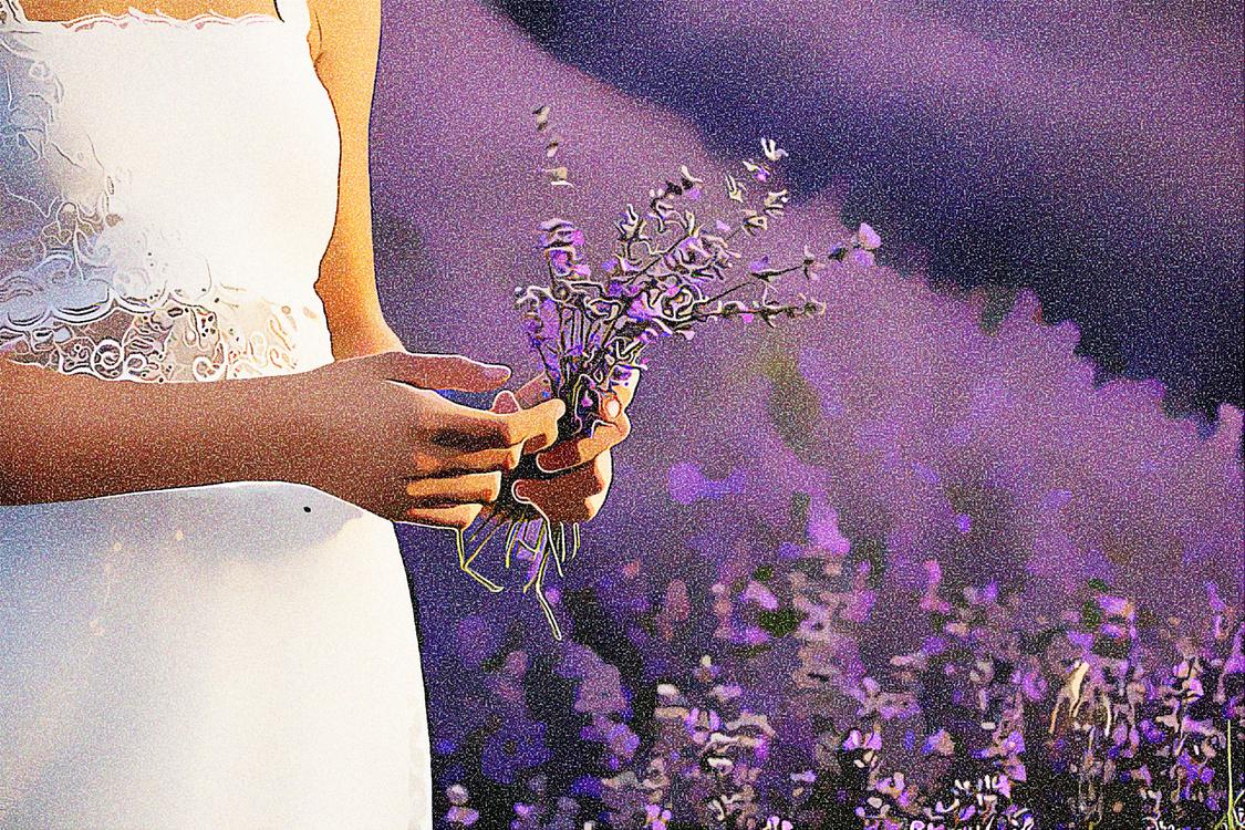 Lavender,English Lavender,Purple