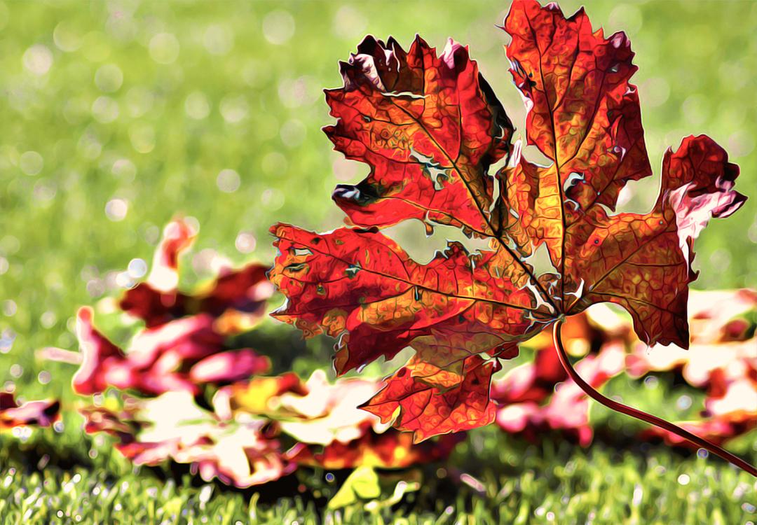 Leaf,Flower,Plant