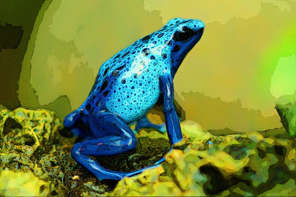Frog,Poison Dart Frog,True Frog