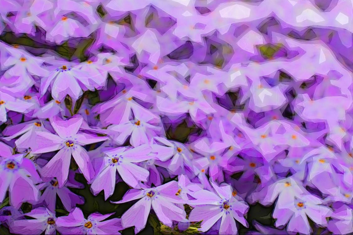 Flower,Purple,Lilac