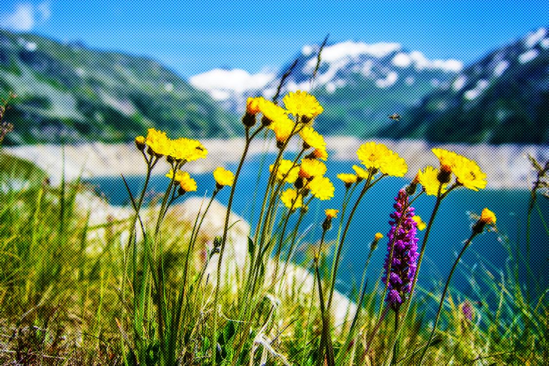 People In Nature,Flower,Natural Landscape