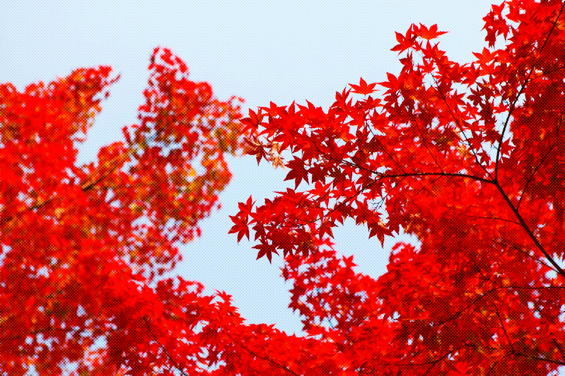 Red,Tree,Plant