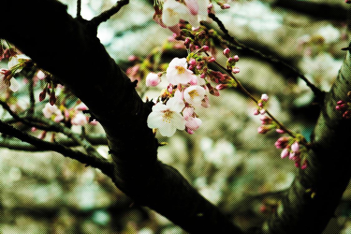 Flower,Branch,Spring