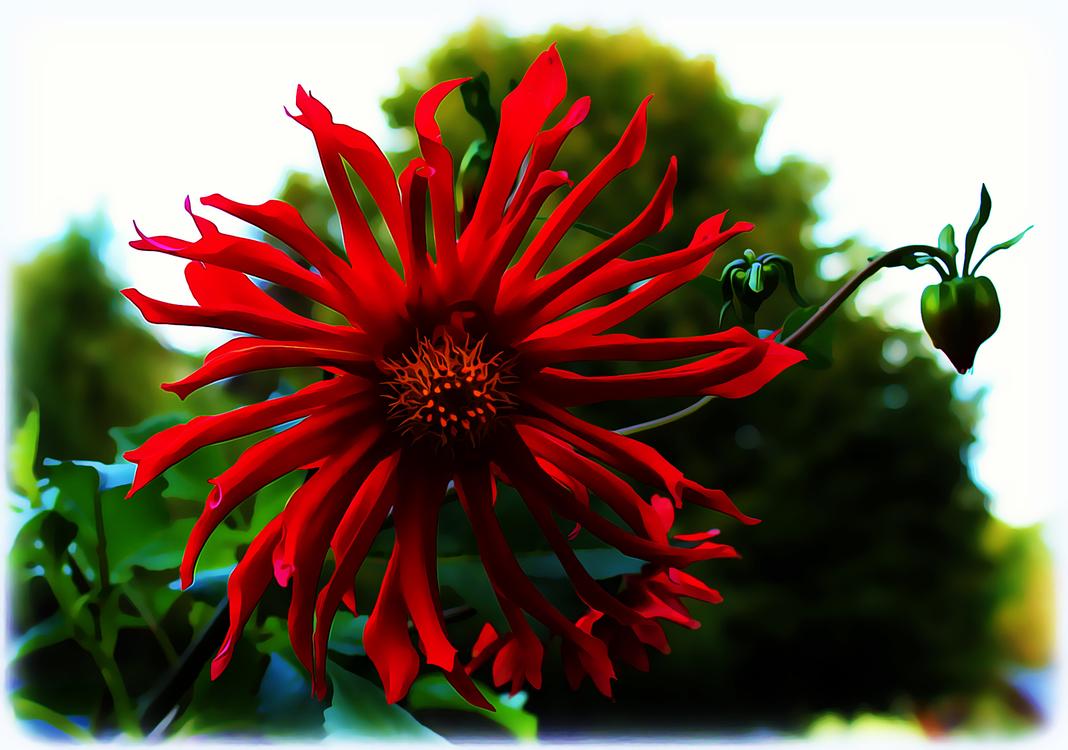 Flower,Flowering Plant,Red
