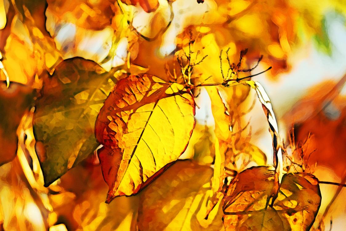 Leaf,Yellow,Autumn